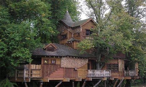 giant-forest-tree-house-building