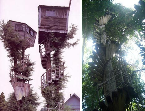 tree house historical