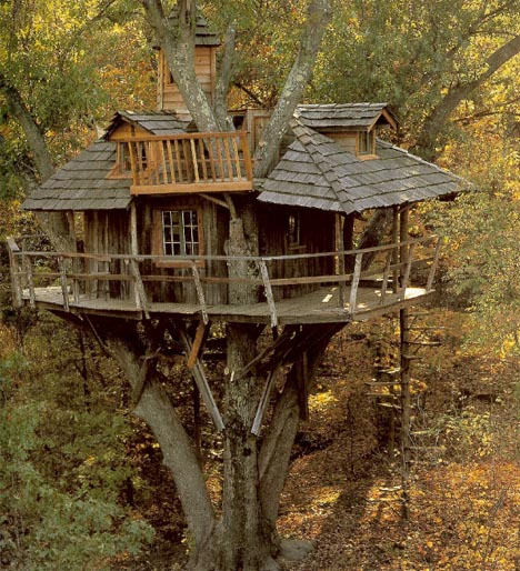 tree house wood classic