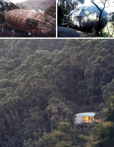 amazing forest tree home