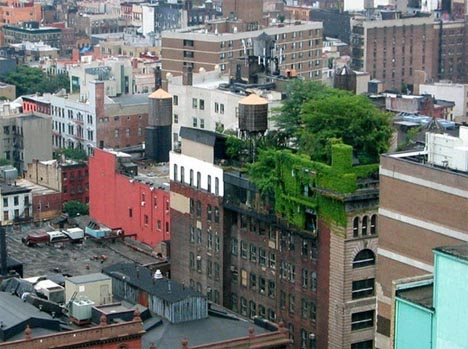 green rooftop deck garden