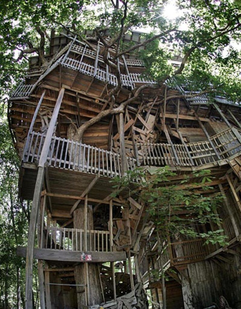 Picture of: Tallest Tree House In The World Designs Ideas On Dornob