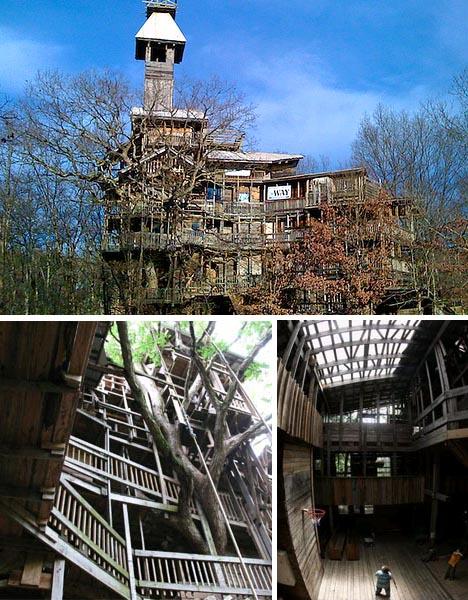 giant tree house
