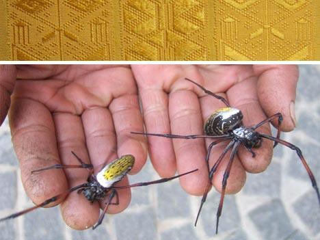 rare golden silk spiders