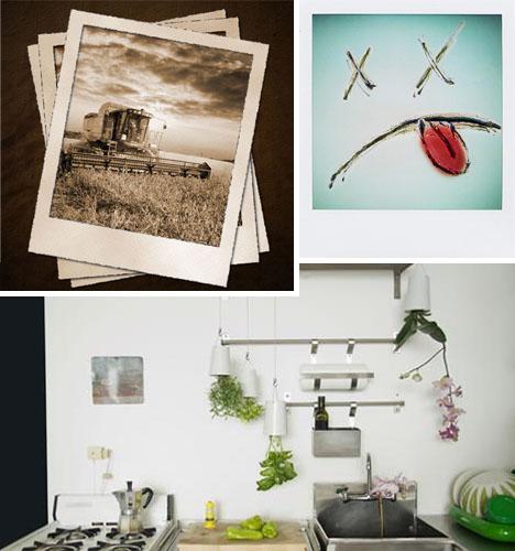 polaroid plant pot concept