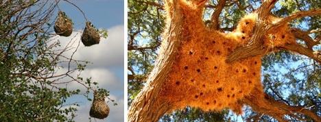 organic treehouse weavers