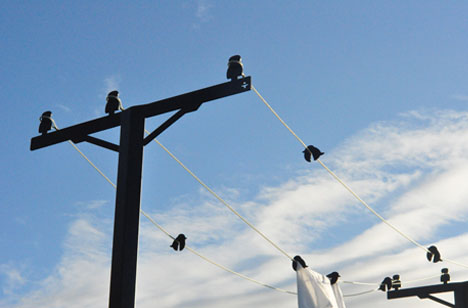 Birds On A Laundry Wire Clever Outdoor Clothesline Design