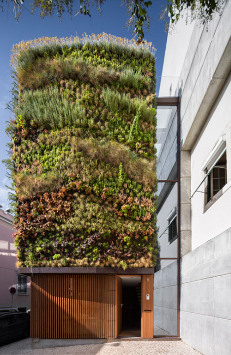 Vertical Garden: Home Facade Covered in 25 Kinds of Plants
