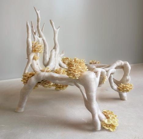 home grown fungus chair