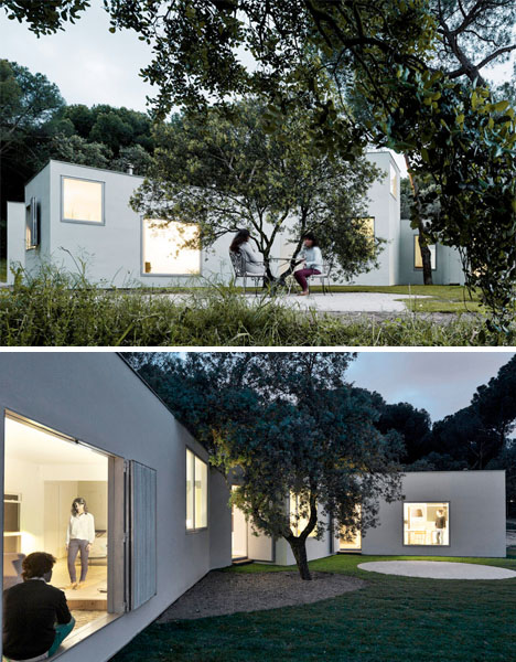 Box House Between the Trees 4