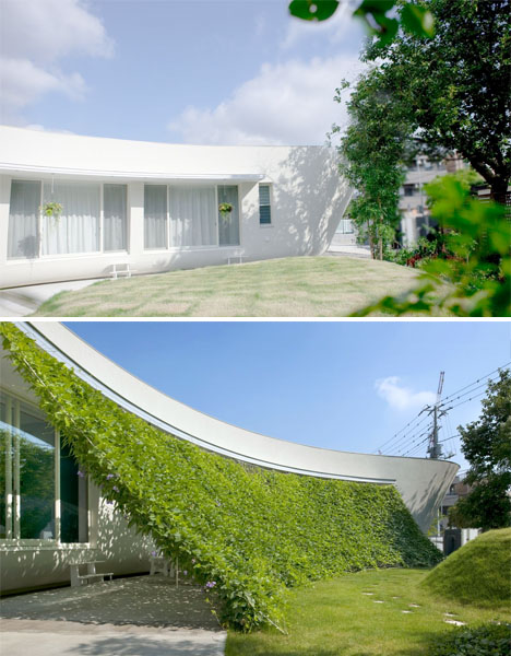 Curtain of Vines Adds Shade and Color to Modern Home