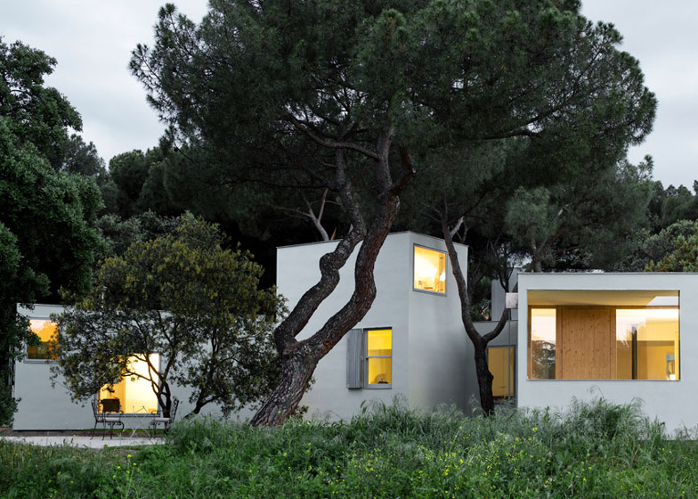 Box House in Trees