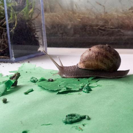 Snail Poop Tiles 1