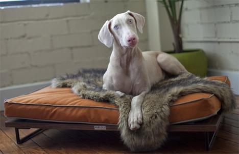 large dog bed architect pets