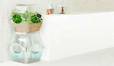 indoor aquaponics vegetable system