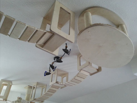kitty walkway from below