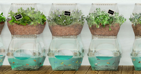 Urban Aquaponics System Grows Food Indoors Year-Round