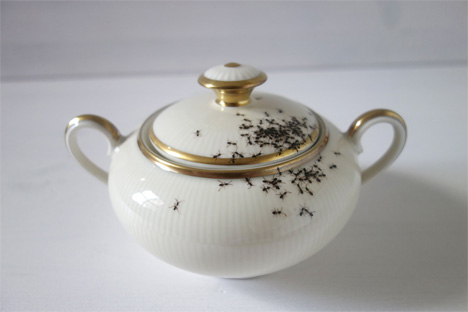 fine china with hand painted ants