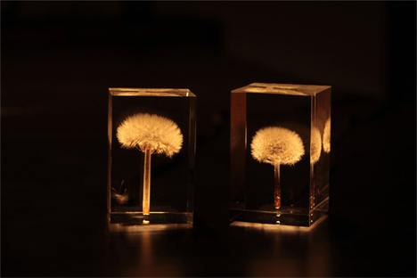 OLED dandelion lamp