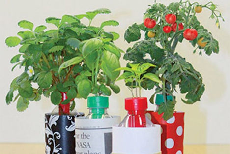 Indoor Plant And Herb Garden Recycled Plastic Bottles