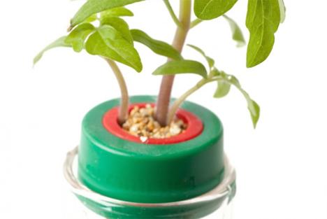seed pit petomato