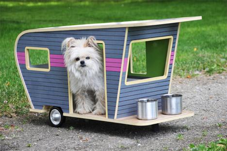 Dog Camper 1
