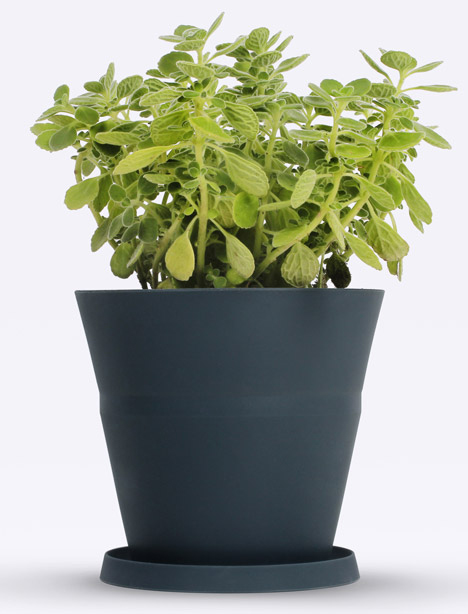 plant pot grows with plant
