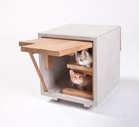 Cat Architecture 5