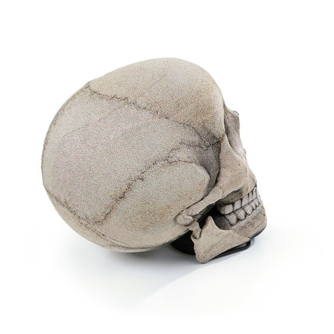 hinged jaw skull chair