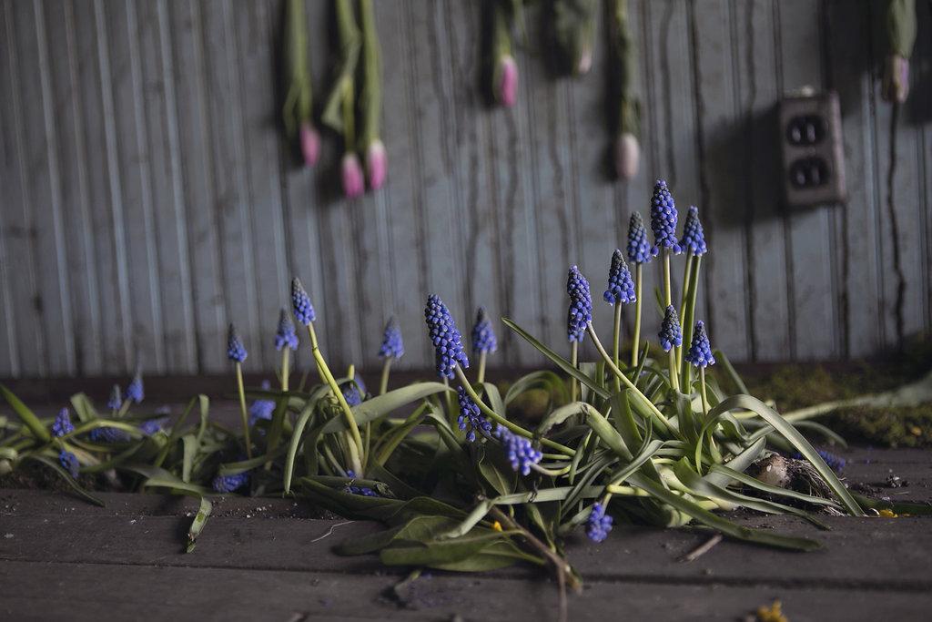 flower-house-4