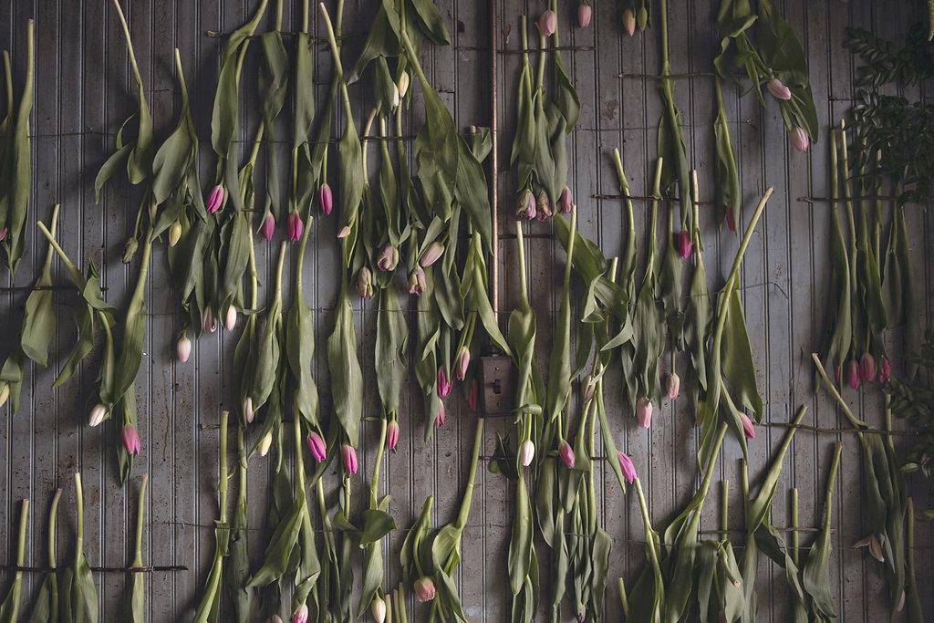 flower-house-tulips