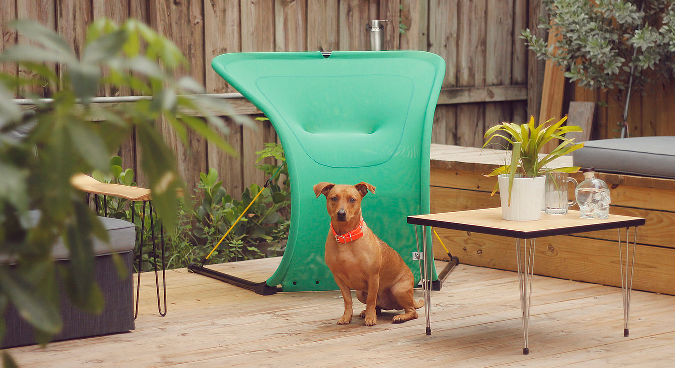 Green Suzak Chair with dog