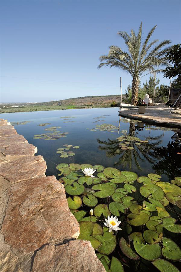 Biotop swimming pond in Israel