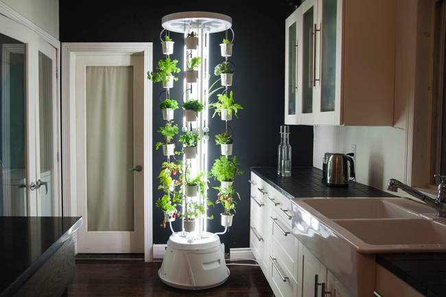 Urban And Vertical Farming Have Been Gaining Steam Around The Globe As Of Late They Could Be A Potential Key Factor In Feeding Our Planet S Exploding
