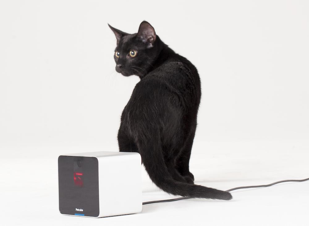 Petcube_Camera-Cat
