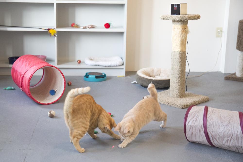 Petcube_Camera-cats