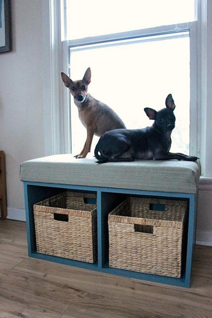Diy Window Perch For Your Pet