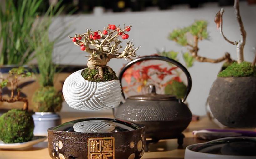 air bonsai 7