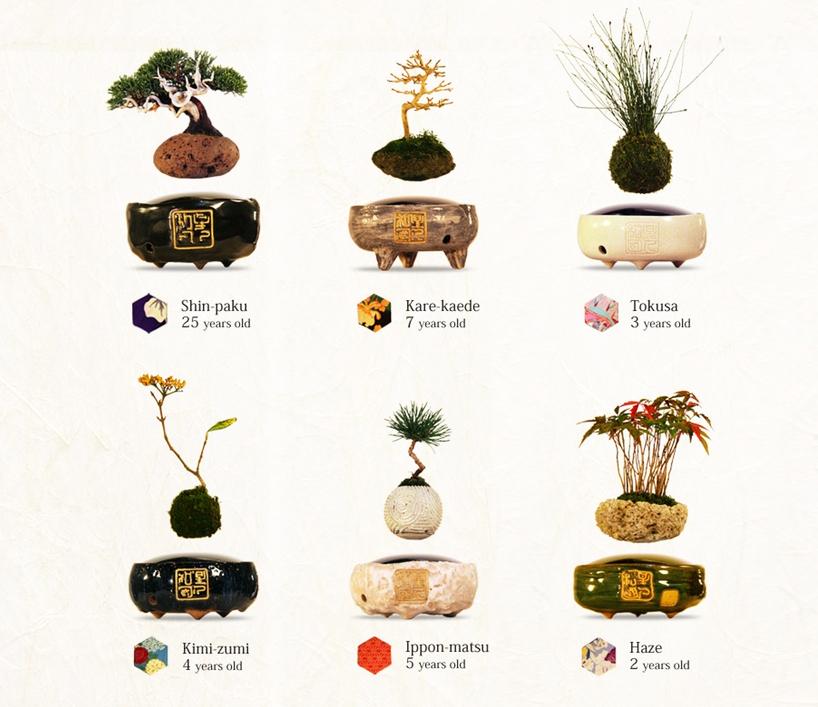 air bonsai 8