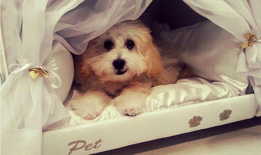 pet-bed-inside-mattress