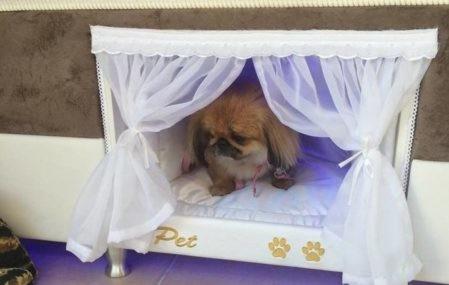 Pet bed inside mattress