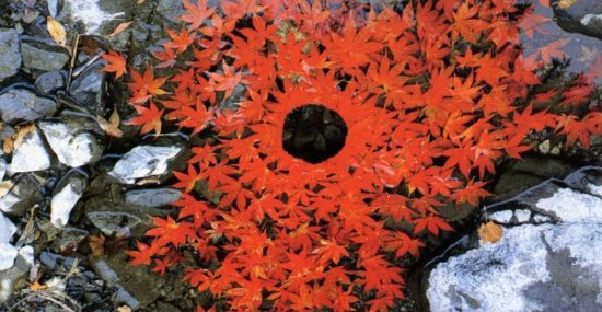 The ephemeral art of Andy Goldsworthy
