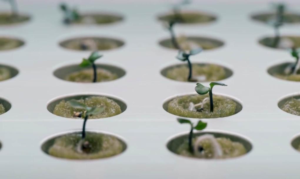 ikea-hydroponics
