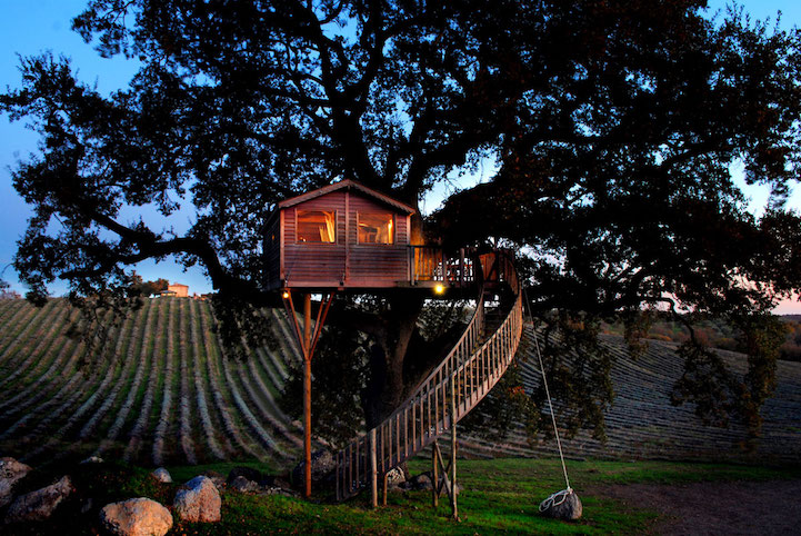 evening view of treehouse in lavender field