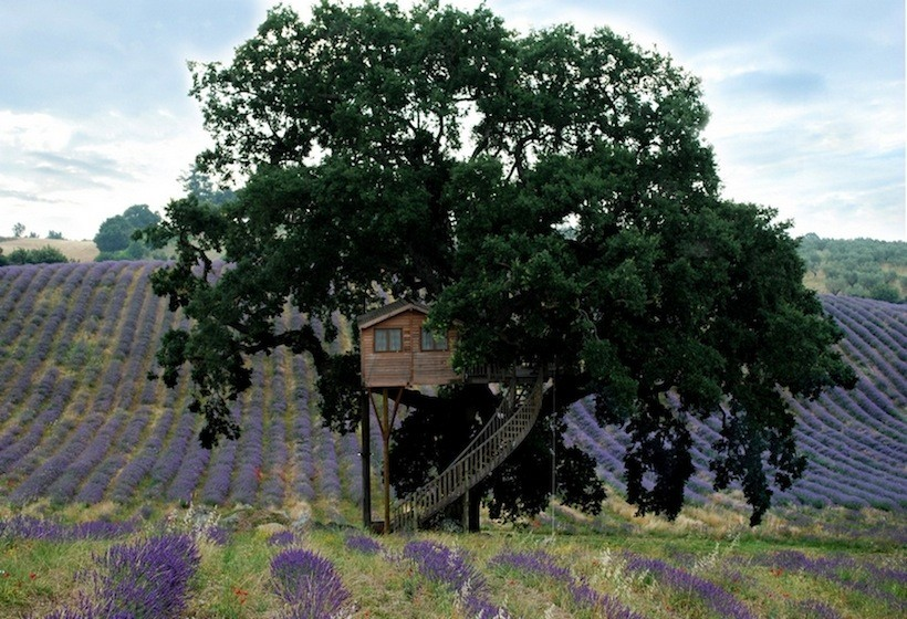 lavender tree house 13