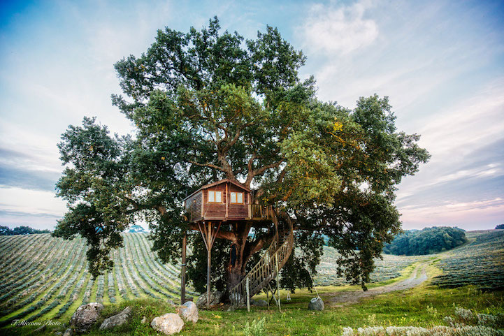 lavender tree house 3