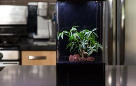 EcoQube home hydroponics