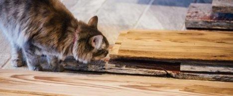 eco cat furniture