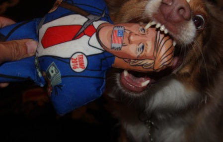 Donald Trump chomp a chump dog toy