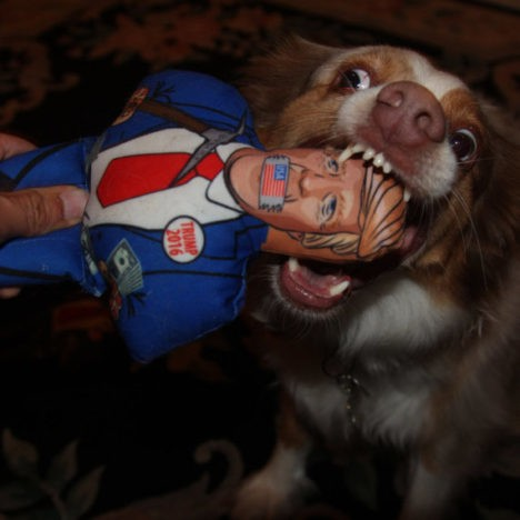 Donald Trump chomp a chump dog toy